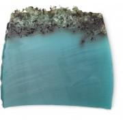 Морські водорості